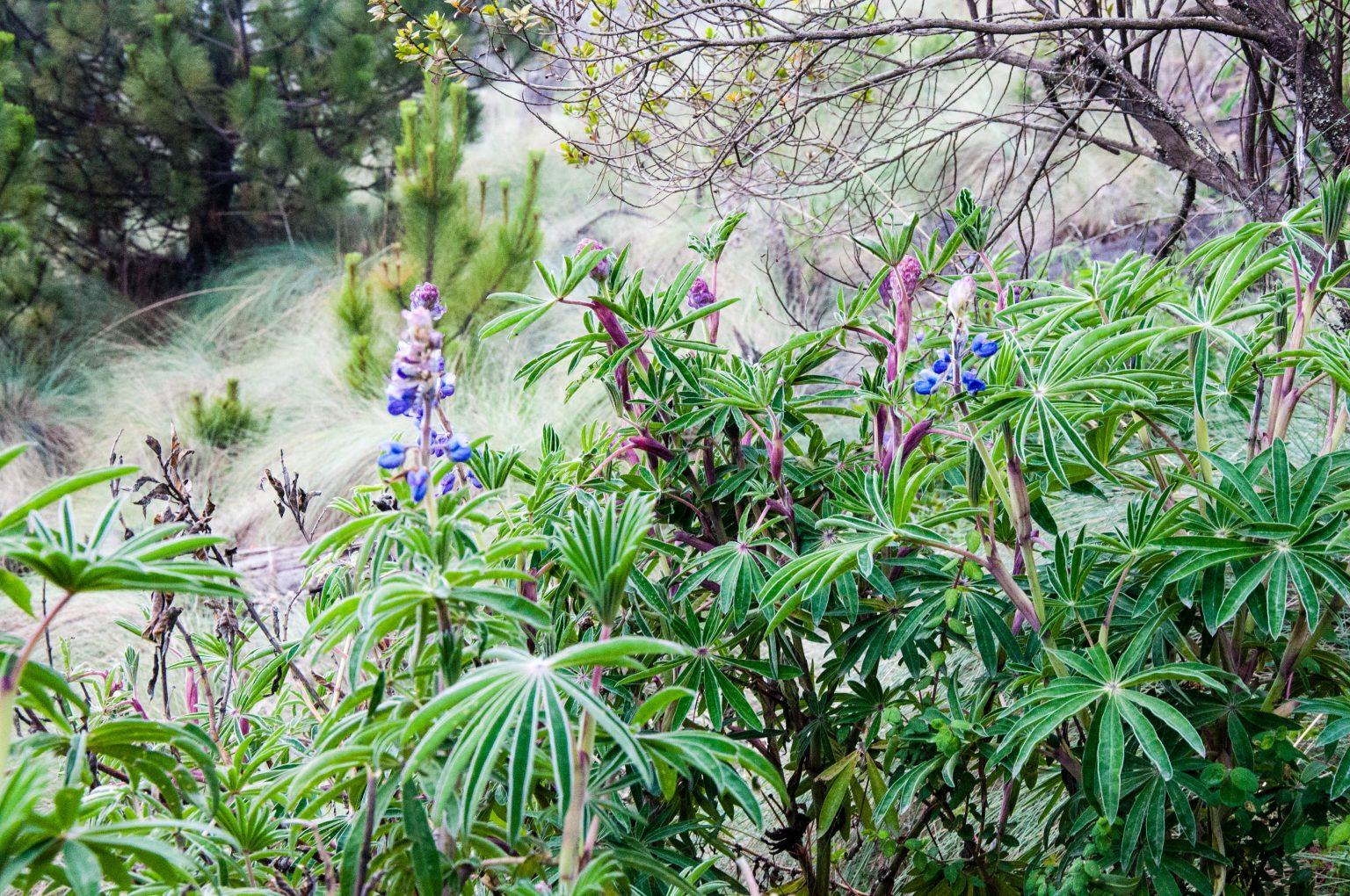 Beim Auf- und Abstieg begleitete uns eine abwechslungsreiche Flora und Fauna durch die Klimazonen.